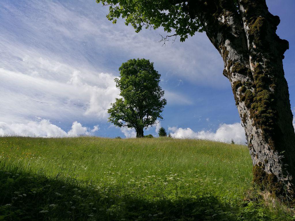 Laufen mal anders – Zugspitz Ultratrail 2018?